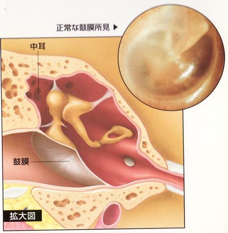 正常な鼓膜の構造