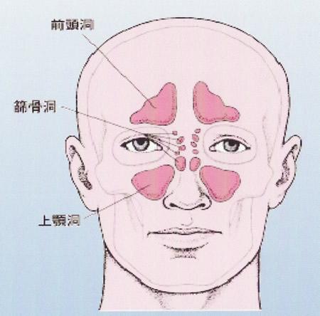 副鼻腔の構造と働き